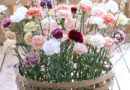 Řezané květiny – Druhá šance pro karafiáty